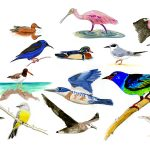 How Many Birds are in North America?