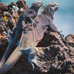 Unique Galapagos Islands Animals in Photos